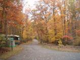 a picture of the trees changing color in the Fall in the B loop of the campground