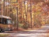 The changing leaves in the Greenbelt campground