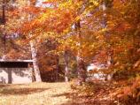 a picture of the changing Fall leaves in the Greenbelt Park campground