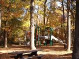 a picture of the Fall colors in the Sweetgum Picnic Area