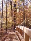 Fall colors on the Perimeter Trail near our new foot bridge