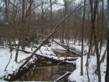 The beauty of Still Creek in the snow