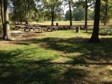 Cluster of picnic tables under trees