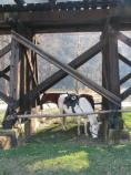 Soldiers' horses rest under the railroad trestle. Scenes from Capt. Flagg's US Quartermaster City: Approach of Peace 1864 Event, Dec. 3-4, 2011. NPS Photo