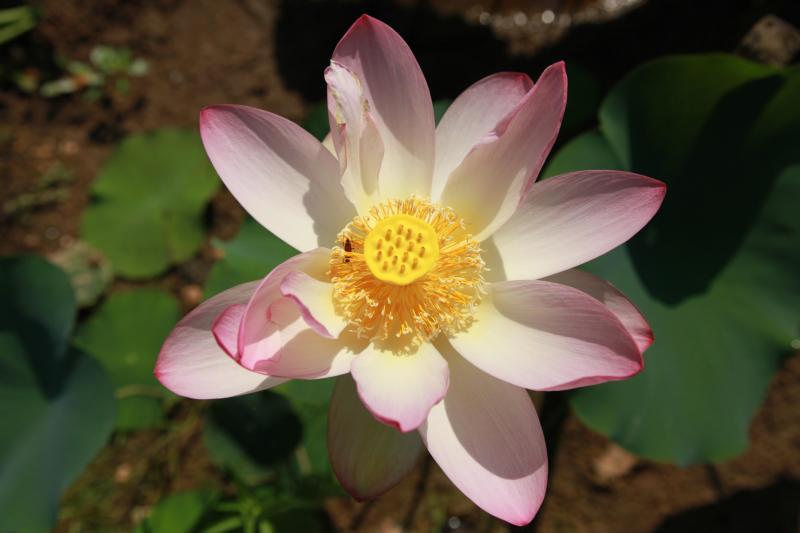 photo gallery u.s. national park service, Beautiful flower