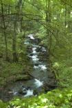 a brook flows in the woods of the Great Allegheny Passage