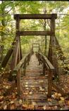 The swinging bridge on Laurel Loop Trail
