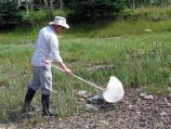 Researcher scours a wet, grassy area for Diptera species.