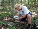 Searching for Collembola