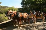 Visitors enjoy a carriage ride from Wildwood Stables.