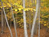 Fall scenery can be found in the park's deciduous forests, not just on mountain tops and along lakes.