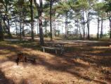 Tingles Island bayside backcountry campsite with picnic table and fire ring in woods