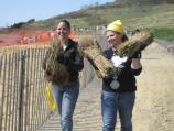 Volunteers carry bundles of grass to planting site.