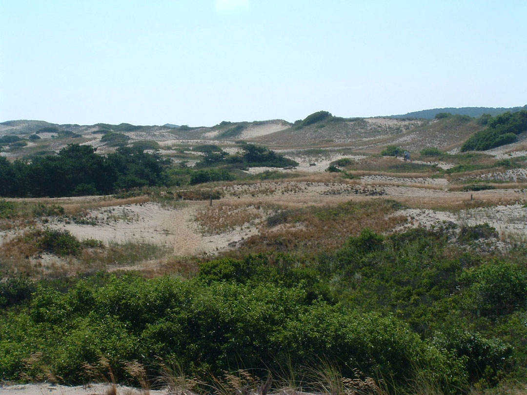 the dunes of the province lands provincetown
