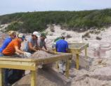 Removing invasive species helps protect dune habitat.