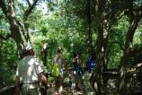 Group of hikers on the Sunken Forest nature trail walk into the dappled shade of tall holly trees.