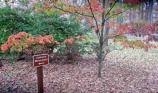 Fall Coloring at Chancellorsville