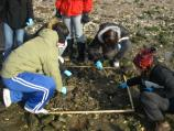High school students turn over rocks to look for the invasive Asian shore crab in the education program