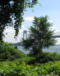 View of the Verrazano Narrows Bridge, as seen from Battery Catlin at Fort Wadsworth.