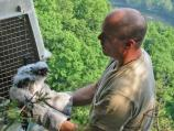 Jack Wallace (WV DNR) and young peregrine chick