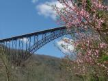bridge with blue sky and trees blooming