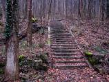 old staircase and building foundation in the forest