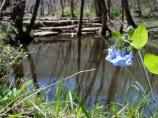 small pond with blue wildflower