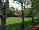 View of the Birch Allee with apple blossoms in distance