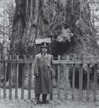Theodore Roosevelt, wearing atypical formal attire, poses in front of a giant redwood tree.