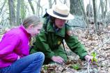 Visitors can learn about Shenandoah's many wildflowers during Wildflower Weekend, held each May.
