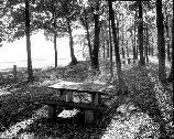 VA-119-82	DOYLES RIVER OVERLOOK. VIEW OF PICNIC AREA IN ISLAND. LOOKING WEST, MILE 81.9.
