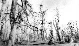 VA-119-97	Catalog B, Higher Plants, 200 2 American Chestnut Tree, Negative No. 6032 (Photographer and date unknown) THIS GHOST FOREST OF BLIGHTED CHESTNUTS ONCE STOOD APPROXIMATELY AT THE LOCATION OF THE BYRD VISITOR CENTER.