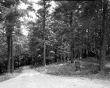 VA-119-15	ELKWALLOW WAYSIDE. VIEW OF PICNIC AREA SHOWING NARROW DRIVE APPROACH THROUGH CAMPGROUND, MILE 24.2.  More about HAER Photo Documentation...
