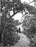 Visitors hike along a tree lined trail with Skyline Drive in the background.