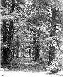 Visitors enjoy the shade of large Hemlock trees