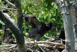 Eaglets stretching their wings