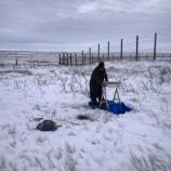 Screening for artifacts on a snowy plain