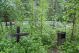 Grave markers poke out of an expanse of green, created by young saplings and dense vegetation that have overgrown the site.
