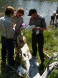 Citizen scientist sampling, Yellowstone National Park.