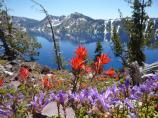 Indian paintbrush and penstemon with Crater Lake in the background.