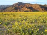 Abundant winter rains caused a spectacular wildflower display in the spring of 2005.