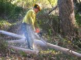 Crew member cutting eucalyptus for piling during ARRA fuel reduction project