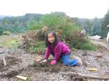 Young girl planting local shrubs