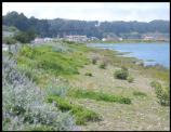 Following restoration, Crissy Field is now functional habitat and a recreation destination.
