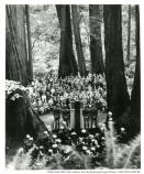 """Muir Woods commemorative ceremony for F.D. Roosevelt Monument, 1945"""