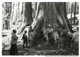Ranger talking to visitors in front of giant tree at Muir Woods, 1978.