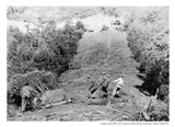 Conservation Corps clearing a roadway in Muir Woods, c1930s.