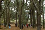 A groups of kids engage in the Ropes Course.