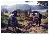 Planting native vegetation at Rodeo Lagoon, 1996.