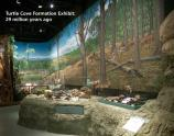 Image of the Turtle Cove Formation mural and exhibit inside the museum at the Thomas Condon Paleontology Center.